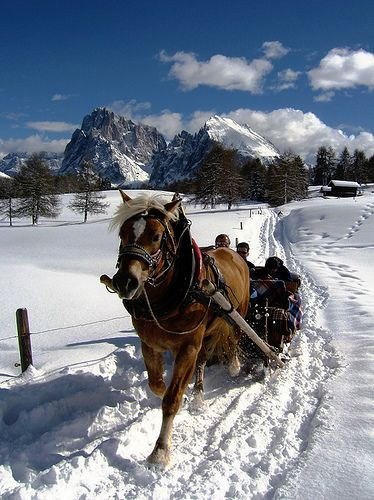 Horse-drawn carriage at Alpe di Siusi